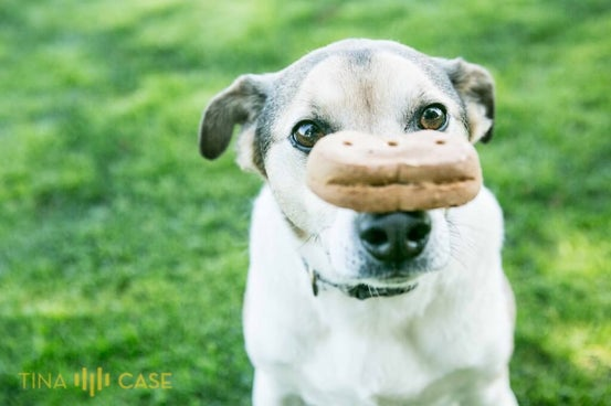 Can your pet have a treat during a photo session.