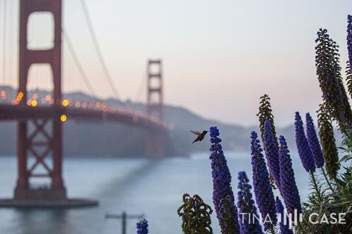 Focus on the hummingbird with the Golden Gate Bridge