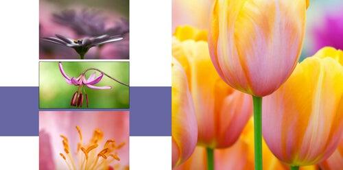 springbreakphotobook4