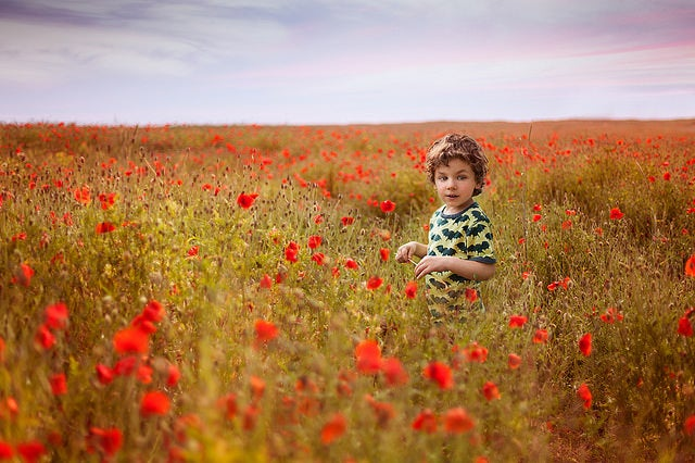 A young boy stands amidst a field of poppies.