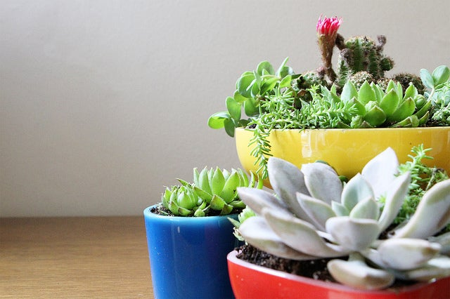 A selection of potted plants.