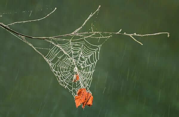 3 Spiderweb in the Rain, NJ
