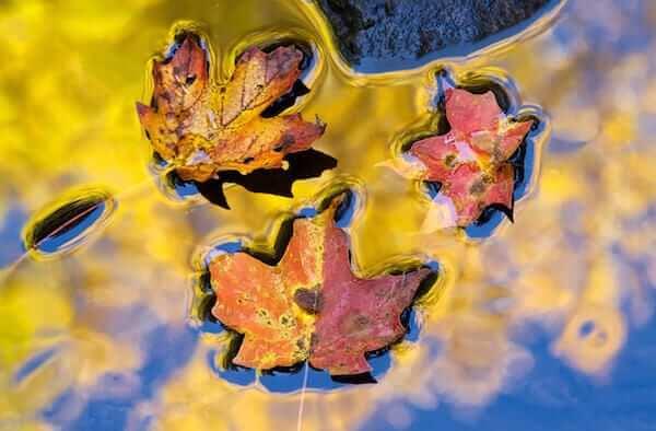 Autumn Leaves, Pennsylvania (1)