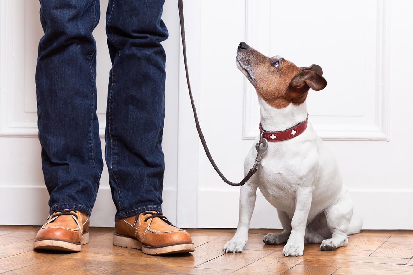 dog at door ready for walk