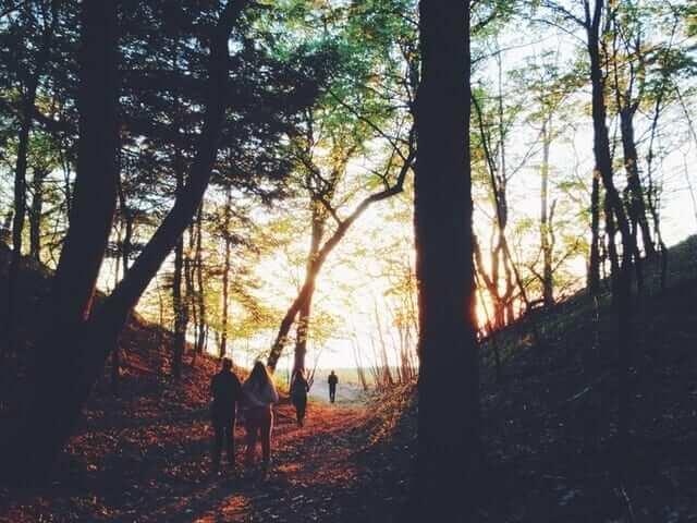 people-walk-through-woods
