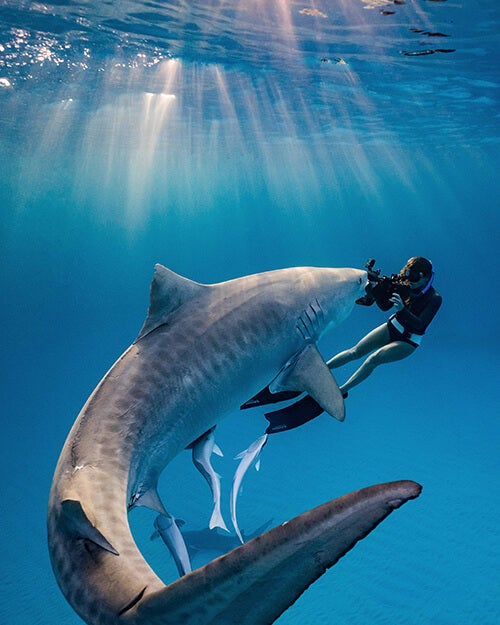 woman underwater photographing shark